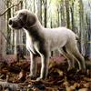 ケーセン社犬ワイマラナー