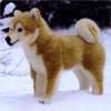ケーセン社柴犬