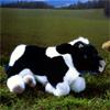 ケーセン社ねそべり牛黒白
